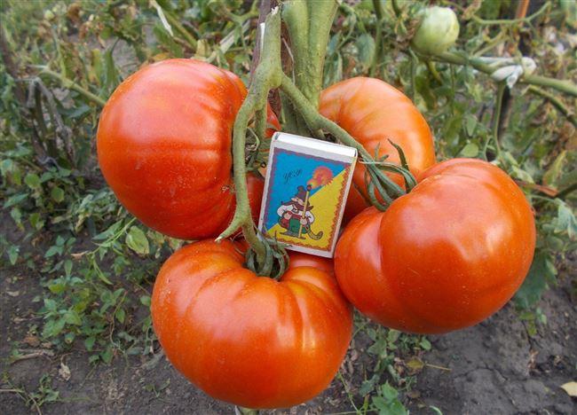 Возможные трудности и особенности выращивания