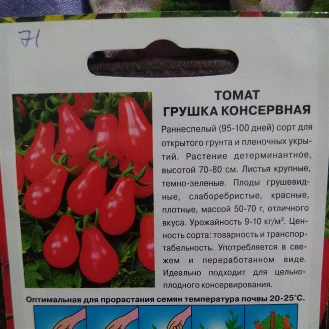 Сбор урожая плодов «Монгола карлика» и его хранение