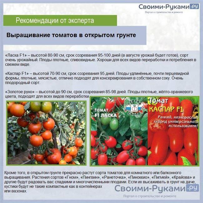 Уход за томатами в открытом грунте