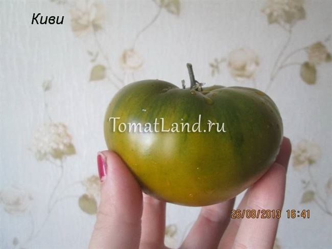 Описание и характеристика томата Киви, отзывы, фото