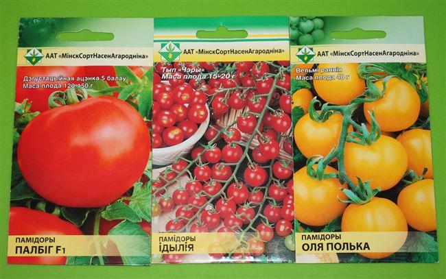 Описание помидоров Оля F1, отзывы, фото