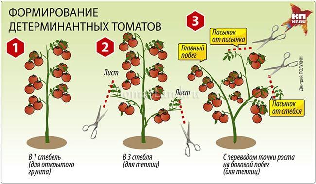 Как формировать куст томата, видео