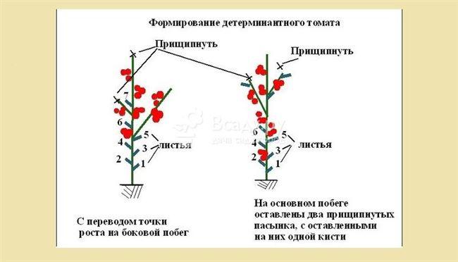 Формирование кустов и подвязка