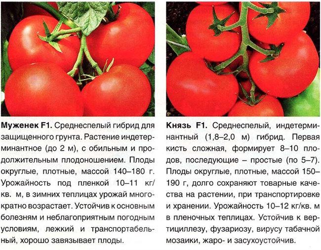 Фото формирования кустов томата
