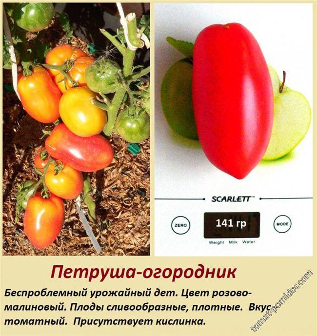 Преимущества и недостатки, как отзываются огородники