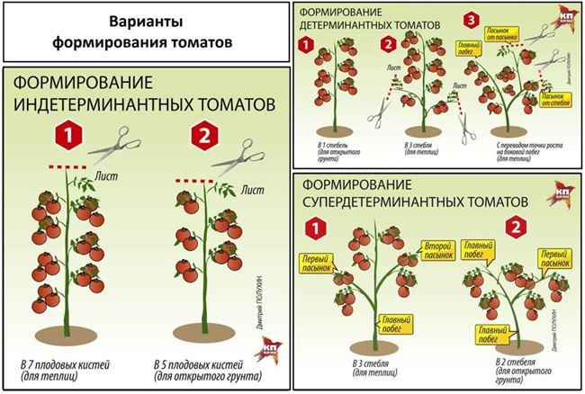 Как и когда прищипывать верхушку томата