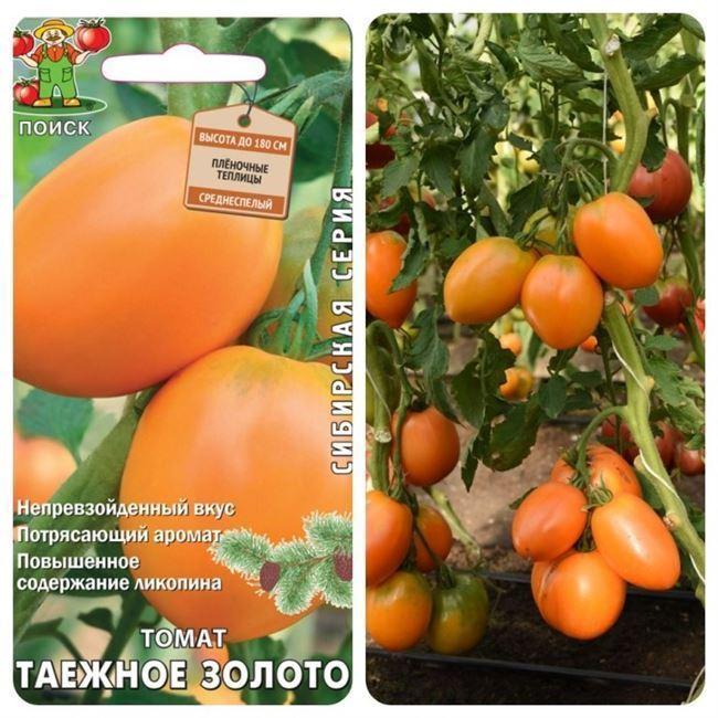 Характеристики плодов и урожайность