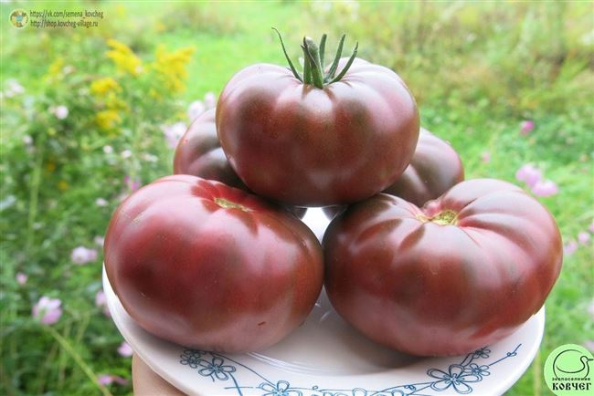 Последующий уход за томатами