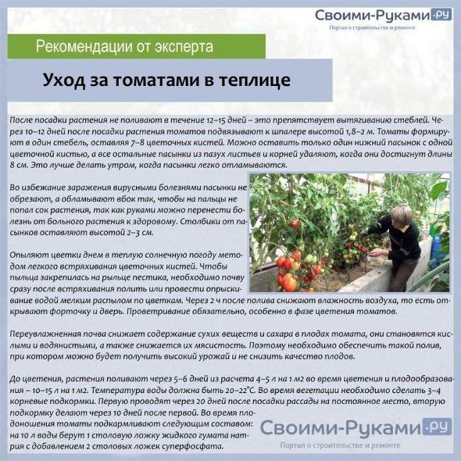 Подготовка открытого грунта для посадки томатов