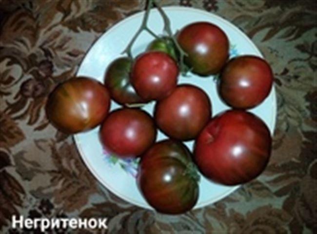 Характеристика и описание сорта томата Негритенок, его урожайность