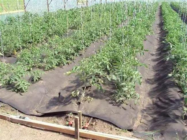 Видео: как правильно мульчировать почву