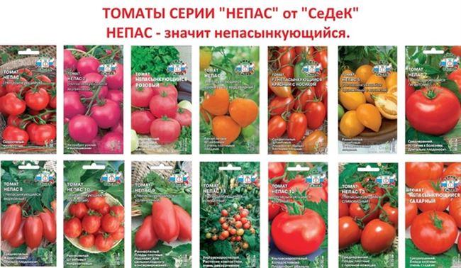 Особенности выращивания и ухода за помидорами Непас