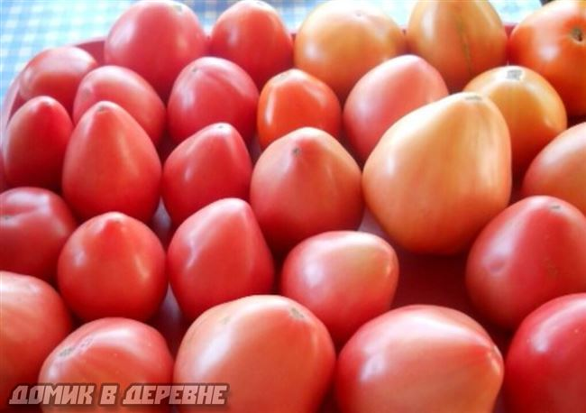 Сбор и обработка урожая