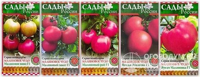 Посадка семян томата Джекпот на рассаду