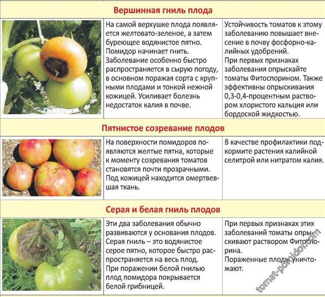 Основные меры профилактики фитофтороза томатов