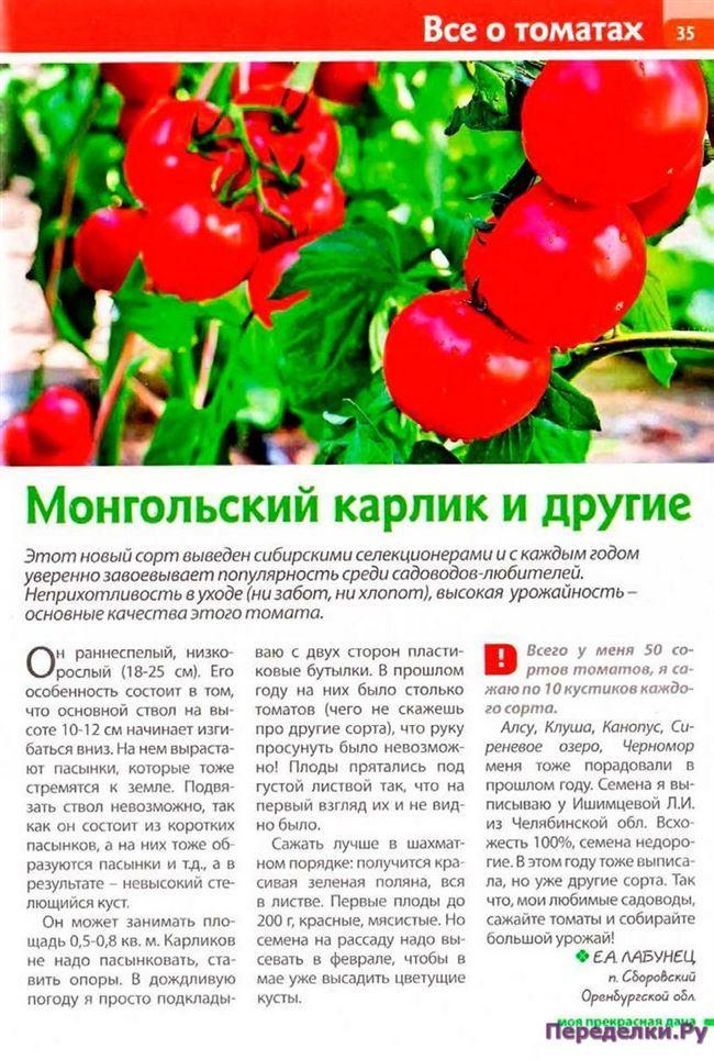 Отзывы других садоводов об антоциановых томатах