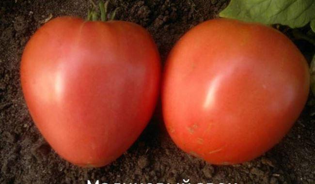 Томат малиновый звон f1, отзывы овощеводов, секреты успешного выращивания