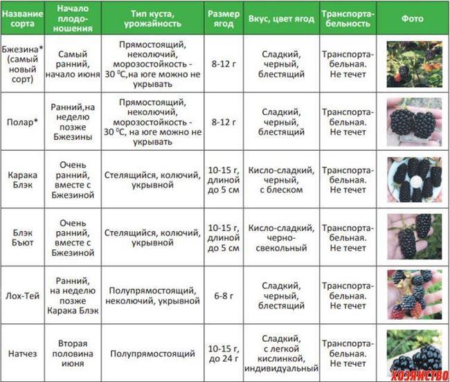 Таблица: болезни, характерные для смородины Пигмей