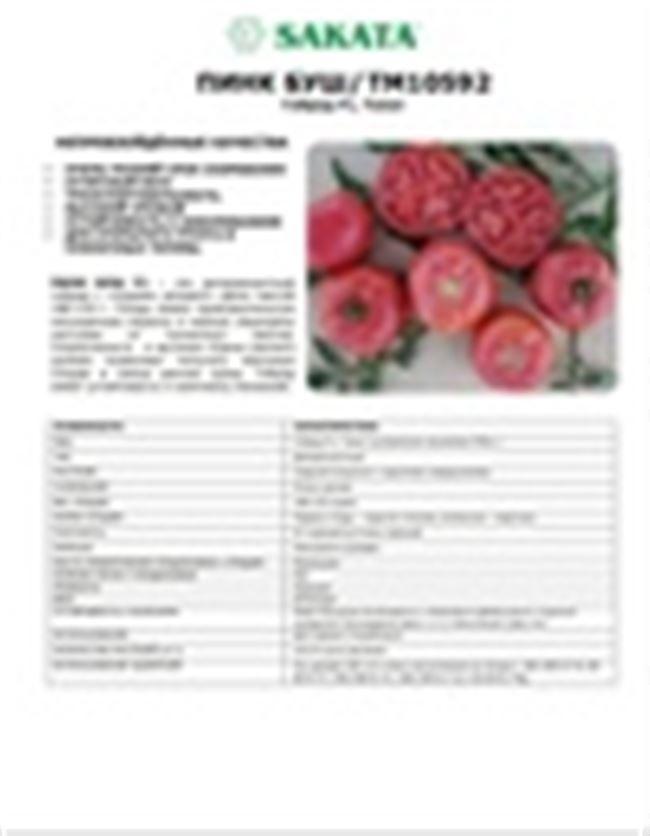 Особенности выращивания томата Пинк Буш, посадка и уход