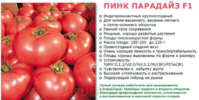 Описание и характеристика помидор Пинк Парадайз