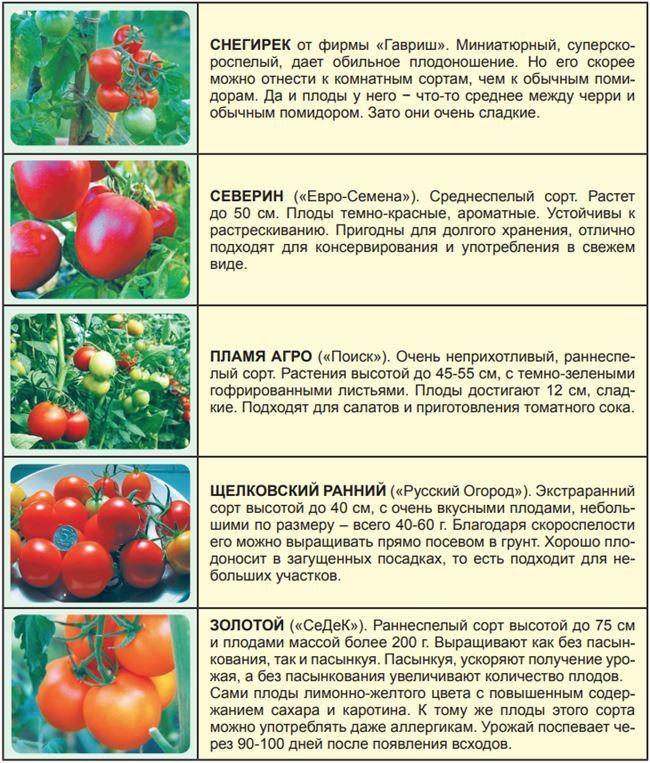 Плюсы и минусы томата