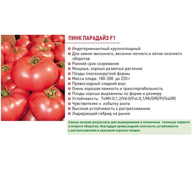 Урожайность томата Пинк Парадайз