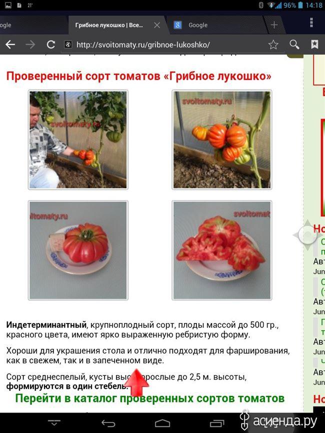 Особенности выращивания томатов Грибное лукошко, посадка и уход