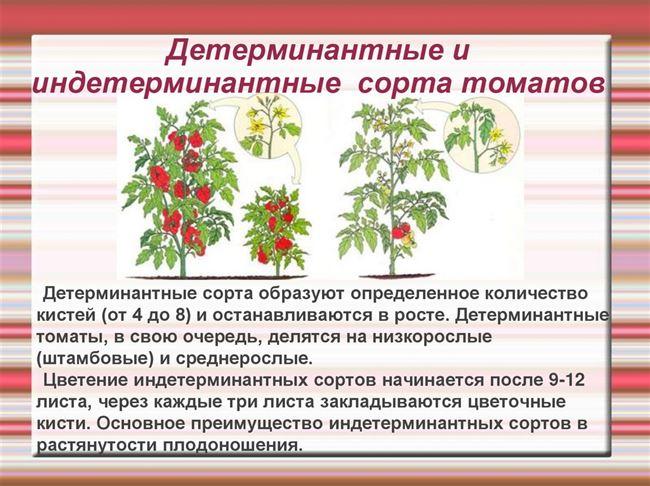 Посадка в грунт и уход за растениями