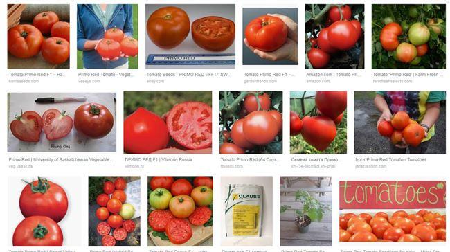 Заказать семена томата Примо ред F1