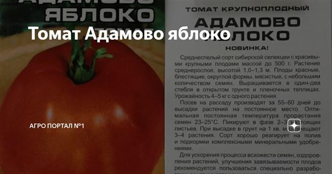Описание и характеристика томата Адамово яблоко, отзывы, фото