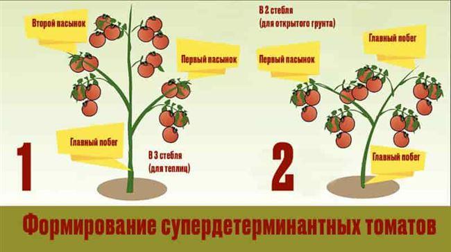 Формирование детерминантных томатов, видео