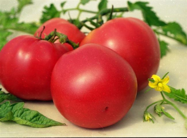 Особенности агротехники гибрида, отзывы земледельцев