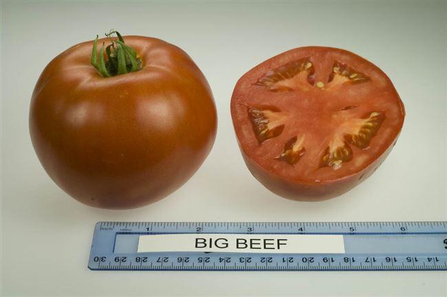 Характеристика плодов Биг Биф