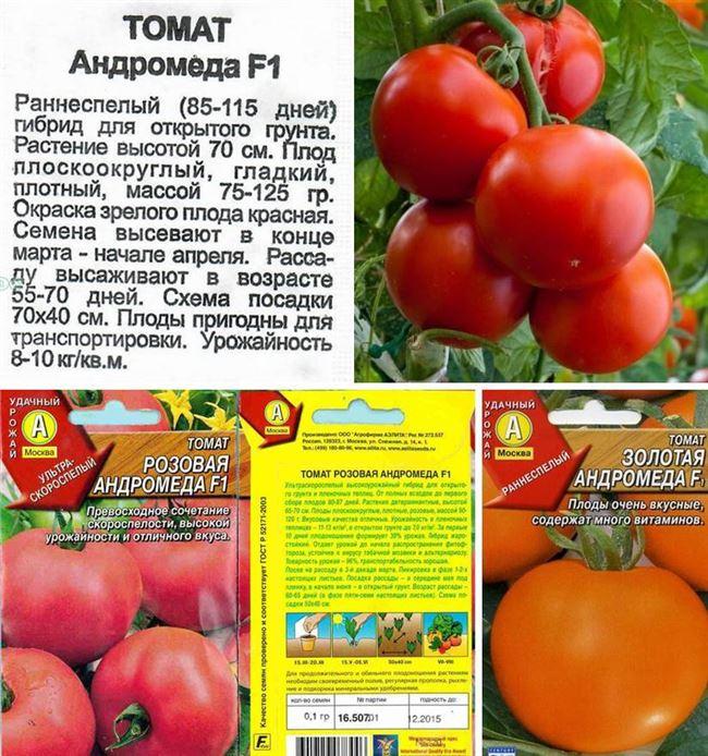 Описание и характеристика томата Андромеда F1, отзывы, фото