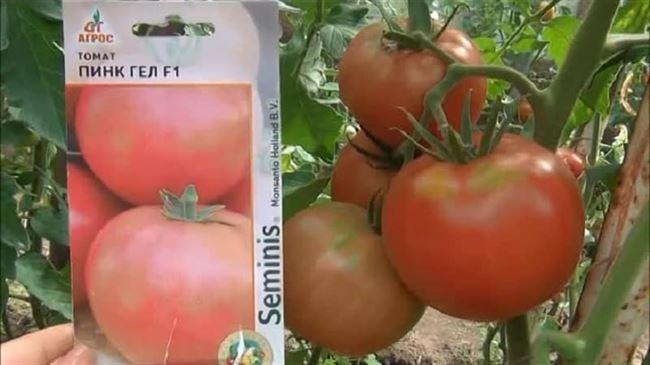 Формирование помидоров на видео
