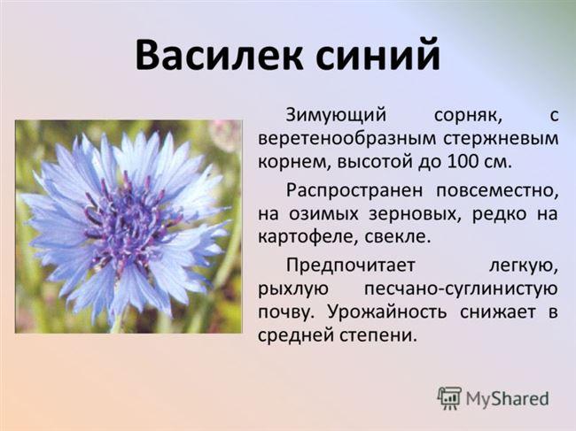 Василек – размножение растения