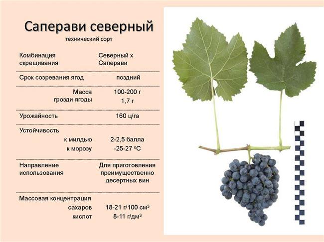 Уход за виноградом включает в себя: