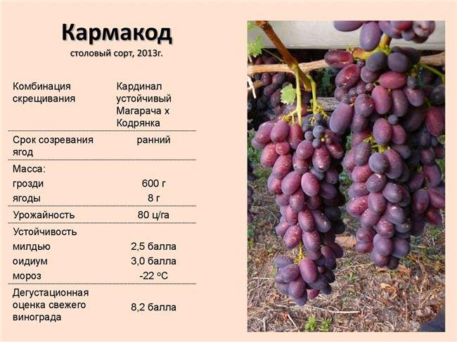 "10 комментариев к ""Болезни и вредители винограда. Лечение, описание, фото+ВИДЕО"""