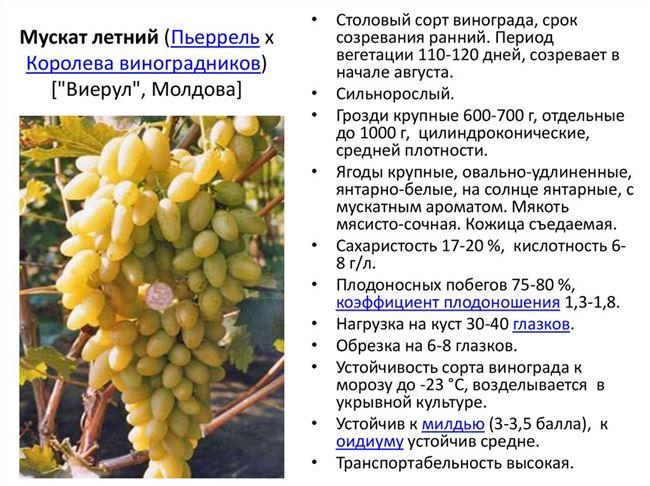 Длительное хранение свежего винограда