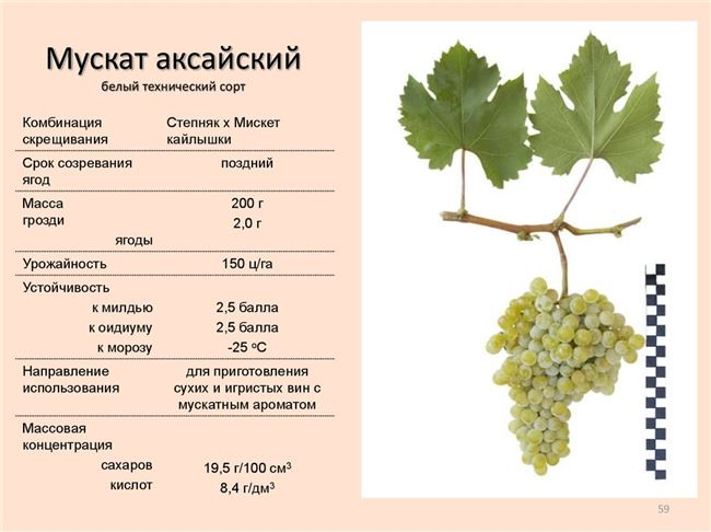 Сезонное расписание ухода за виноградом