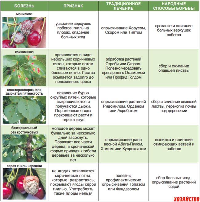 Причины заболеваний вишни