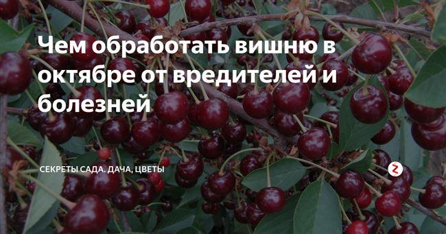 Профилактика болезней вишни и последствия