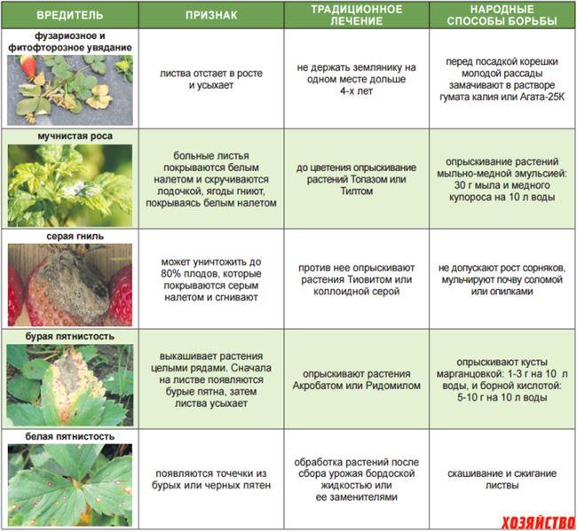 Болезни земляники и эффективное лечение осенью и весной