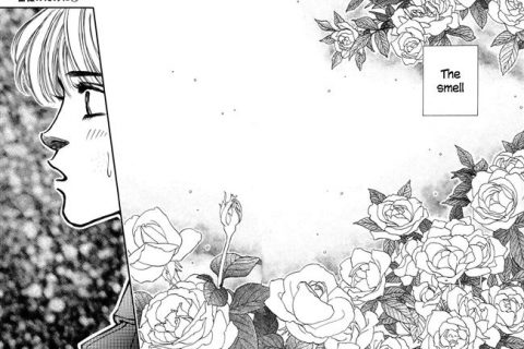 Манга — сорт растения Роза