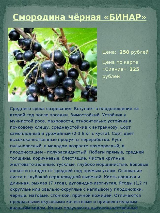 Смородина Оджебин: описание, уход, инструкция по выращиванию