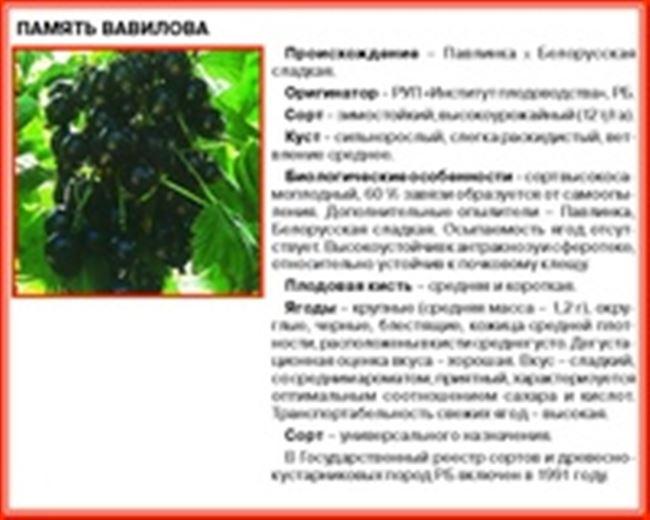 Памяти Шукшина