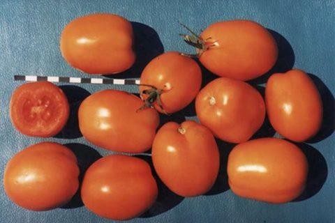 Томат АЛЕКС. Овощи. Среднеспелый сорт, для выращивания в открытом грунте (115-120 дней от всходов до плодоношения). Плод удлинённо-овальный иногда с носиком, гладкий, оранжевый, массой 45-88 г. Ценится за стабильную урожайность, пластичность, хорошие вкусовые качества плодов. Рекомендуется для
