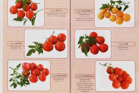 Ультраранние сорта низкорослых томатов | Lifestyle | Селдон Новости