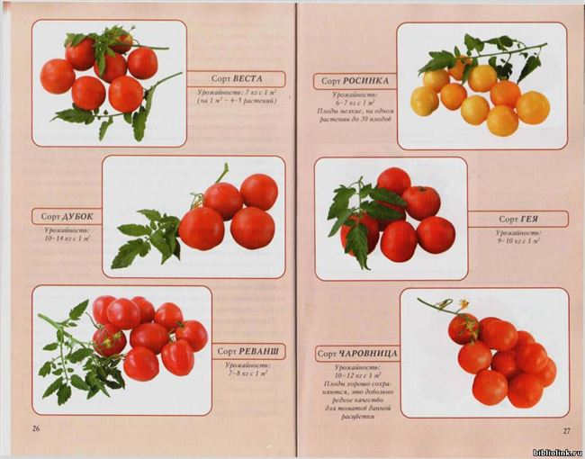 Сорта томатов: список по алфавиту