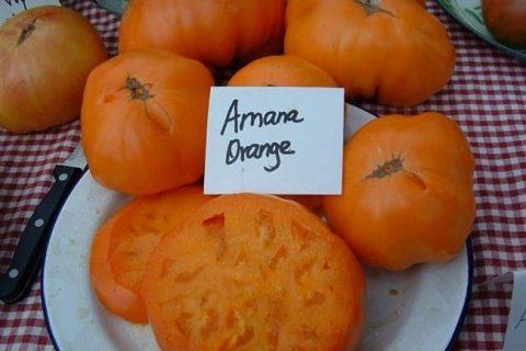 Описание сорта Томат Амана Оранж. Процесс посадки и ухода за помидорами. Отзывы, фото и видео.